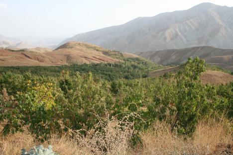 زمستان لواسان راحت آباد