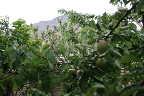 سیب لواسان راحت آباد